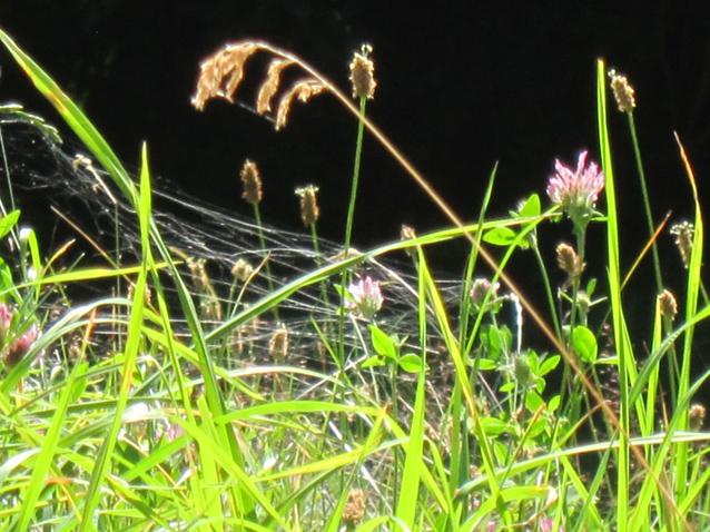 Spinnennetz_und_Blumen